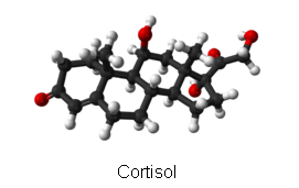 Cortisol and PTSD