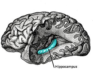 Hippocampus PTSD